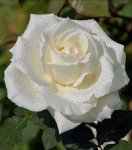 flower12.jpg